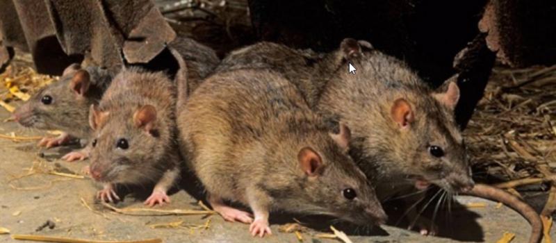 Increasing Pest Population